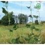 FLORA daržovių/augalų prilaikymo tinklas