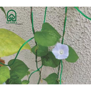 Tinklas lipantiems augalams